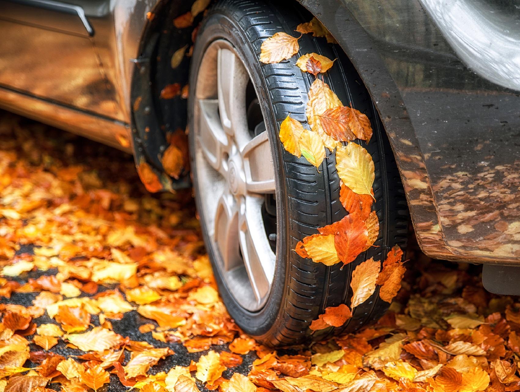 el peligro de las hojas